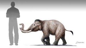 Mammuthus creticus, next to a man for scale. By Viktor Leshyk. (c) NPG